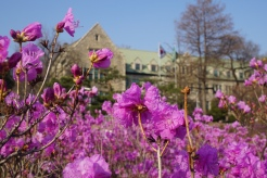 The pastoral setting of the campus means a very picturesque site in Spring