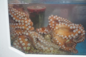 An octopus sits around the tank waiting to be carved up
