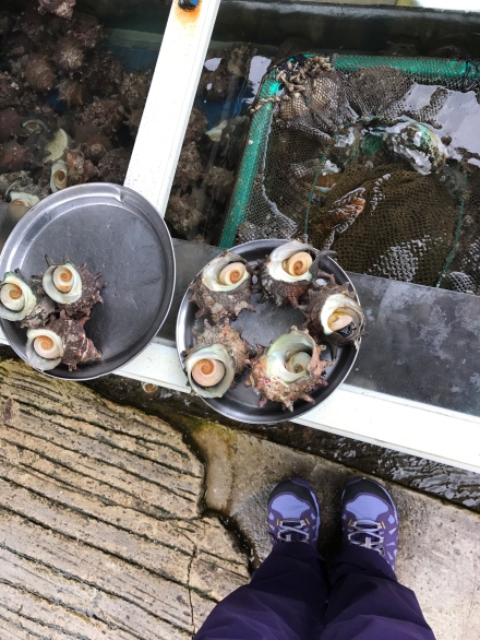Some shells of sorts fished out for inspection